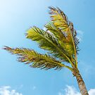 Palm Tree in The Breeze by Southern  Departure