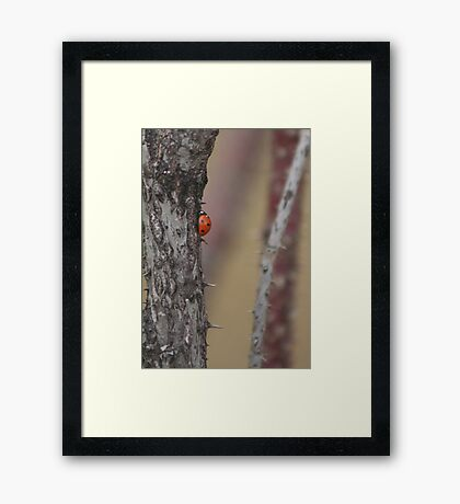 The Way to the Top isn't Easy Framed Print