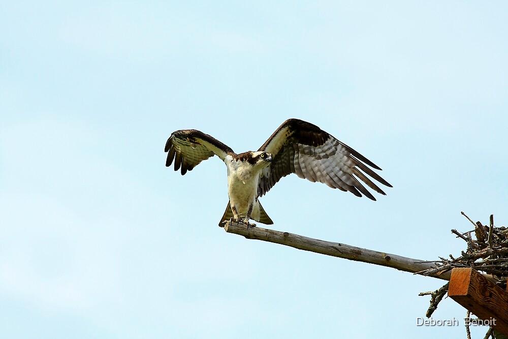 Flexing My Wings by Deborah  Benoit