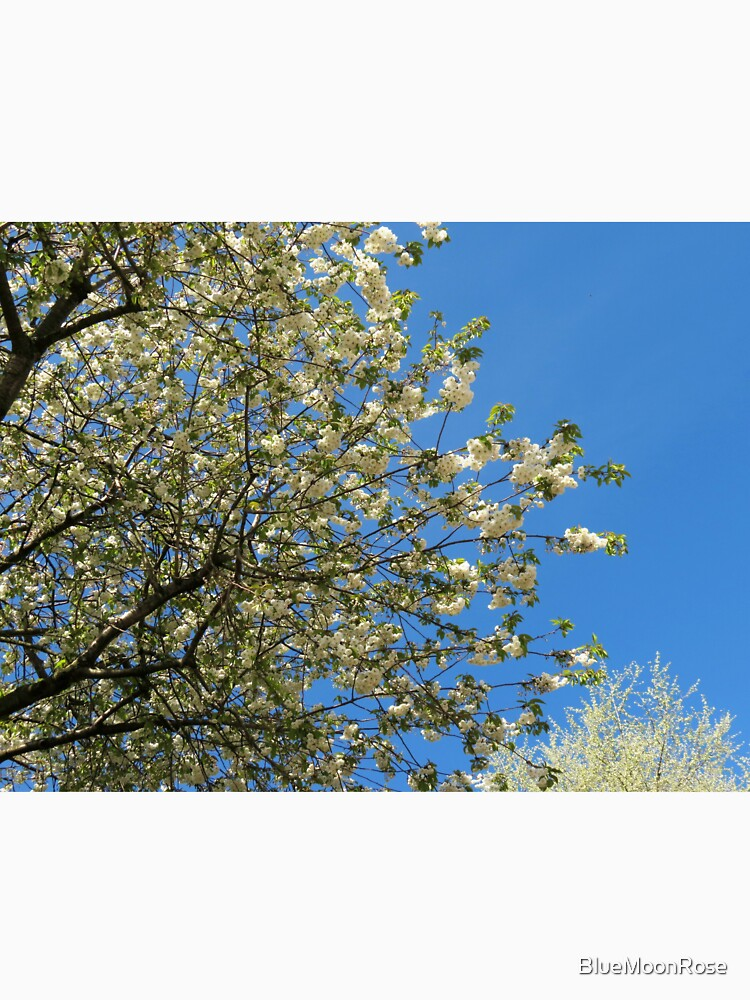 Weiße Blüten des Frühlings von BlueMoonRose