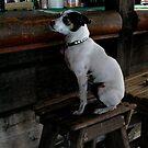 Key West Bar Dog by Margaret Shark