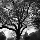 Dark trees - nature in monochrome by Agnes McGuinness