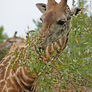 Just a little snack, Arusha National Park, Tanzania, Africa by Adrian Paul