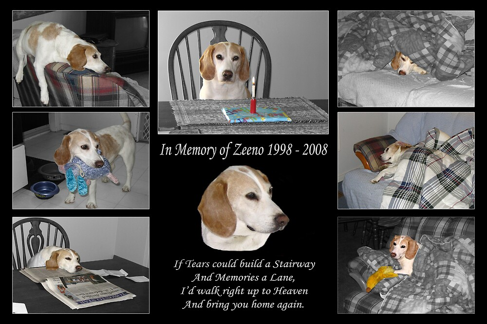 In Memory of Zeeno by Dave Law