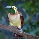 Tropical colorful birds by loiteke