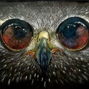 Owl by dianeg17