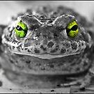 Frog by dedakota