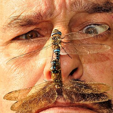 Dragons on my Nose! by NaturesEarth