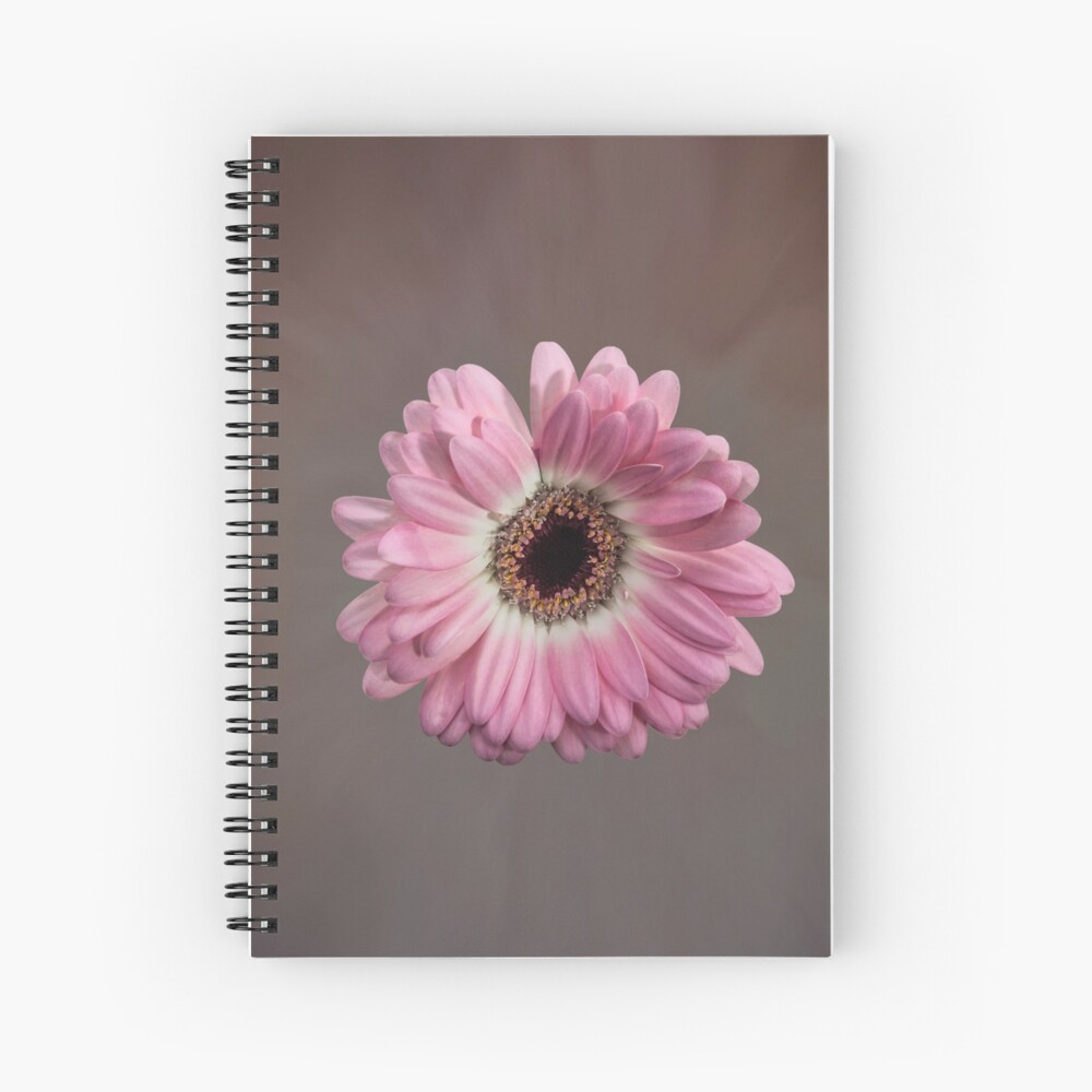 Single pink Gerbera Flower Spiral Notebook