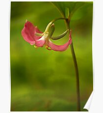 Hot Pink Trillium Poster