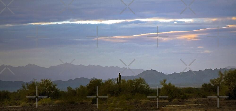 The Arizona Landscape by CarolM