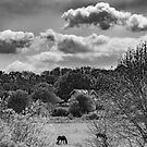 Horse in the field by Joe Gillbanks