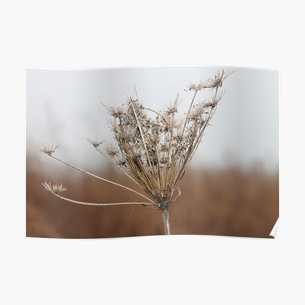 Nature, MotherEarth, Environment ,Wildlife, Flora, Kind, Grain, Park Poster