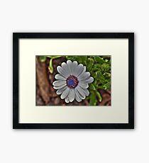 Daisy - Enhanced Framed Print
