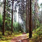 Path in the woods by Lenka Vorackova