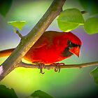 Red Cardinal by TJ Baccari Photography