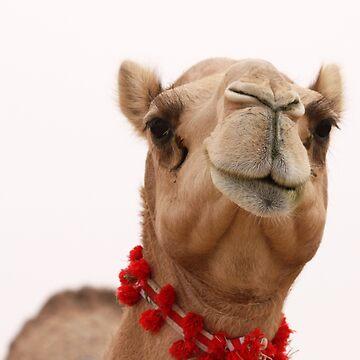 Camel in Abu Dhabi camel market, Abu Dhabi, UAE  by sylvianik