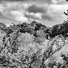 Clouds and cricket green in Black and White by Joe Gillbanks