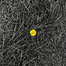 Yellow in the middle of grass by Joe Gillbanks