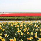 Tulip fields and Narcissus at Keukenhof by Elena Skvortsova
