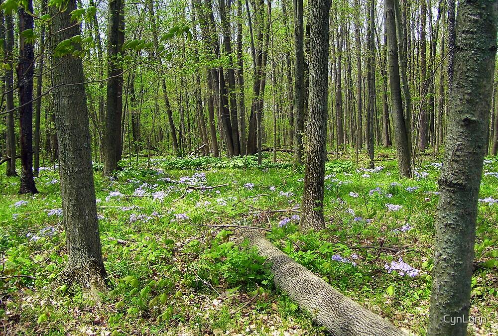 Inside the Mushroom Woods by CynLynn