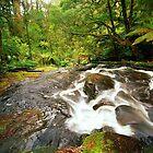 Rainforest Stream, The Otways by Kevin McGennan