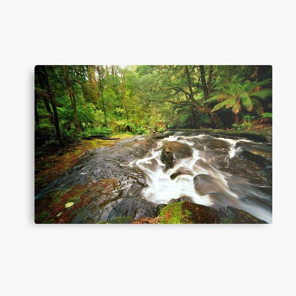 Rainforest Stream, The Otways Metal Print