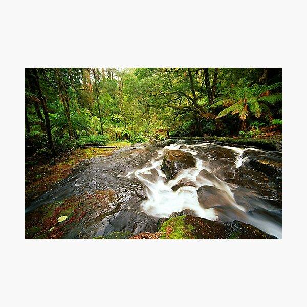 Rainforest Stream, The Otways Photographic Print