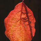 Autumn Leaves 3 by John Brotheridge