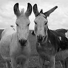 Buddies by Doug Butcher