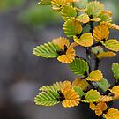 The turning of the Fagus by fiona-gumboots