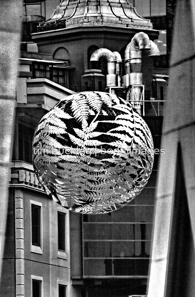 steel fern. wellington, aotearoa by tim buckley   bodhiimages