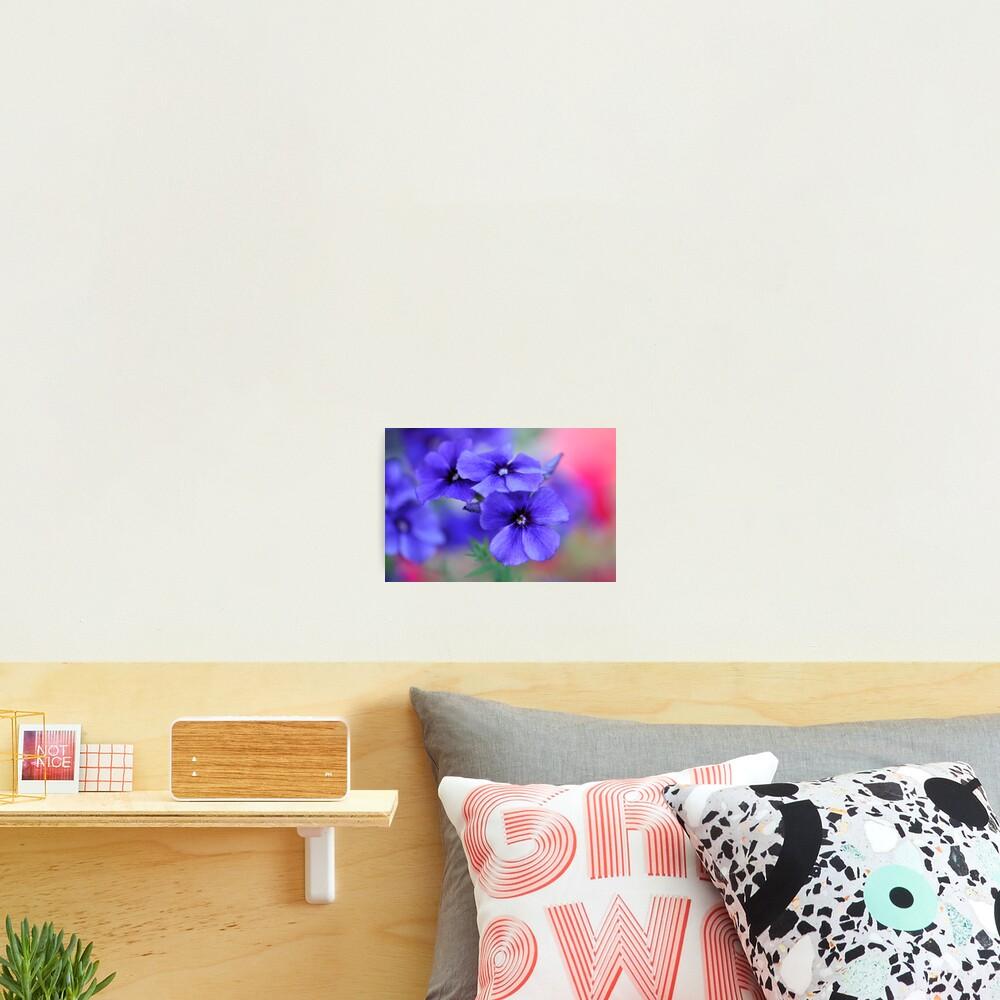My Blue Heaven Photographic Print