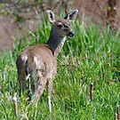 Deer in the Marsh by David Friederich
