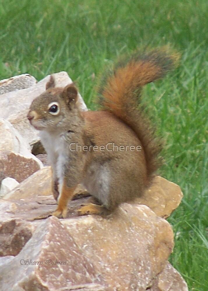 Red Squirel by ChereeCheree