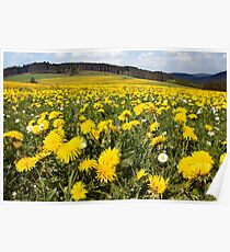 Dandelions & Daisies Poster