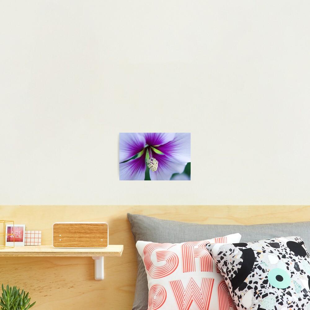 Purple Effusion Photographic Print