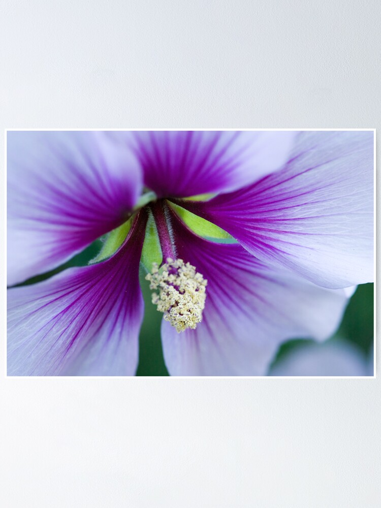 Alternate view of Purple Effusion Poster