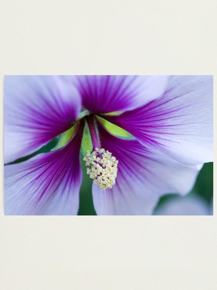 Alternate view of Purple Effusion Photographic Print