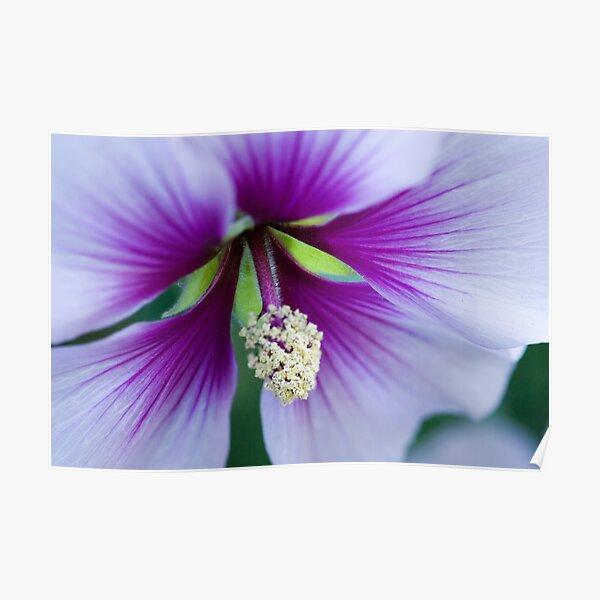 Purple Effusion Poster