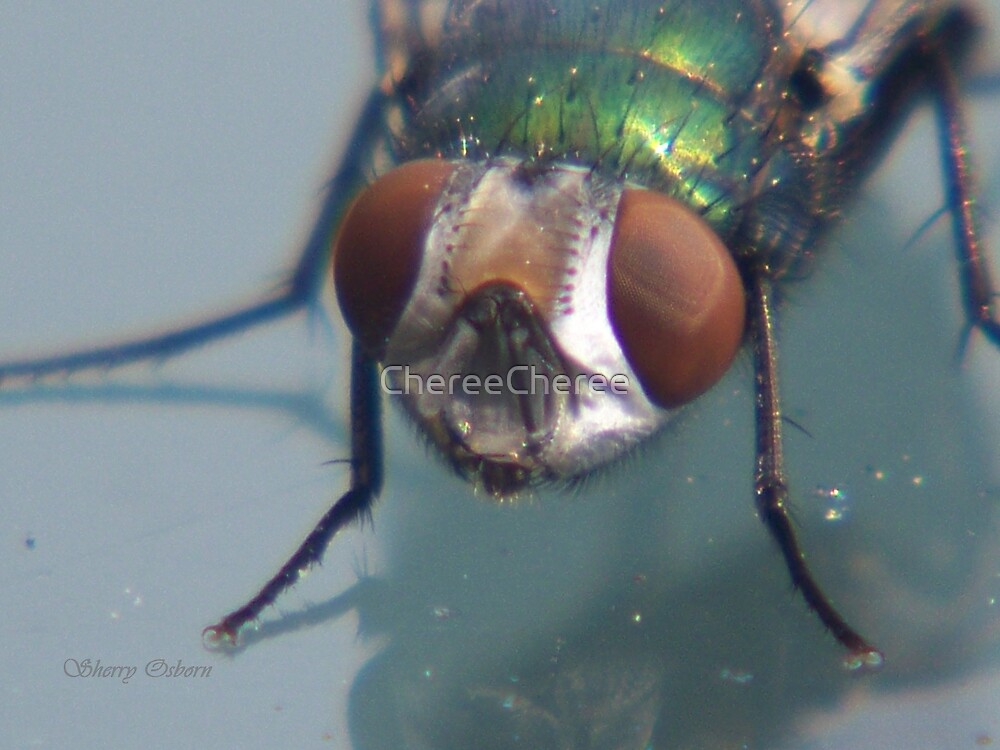 Green Bottle Neck Fly by ChereeCheree