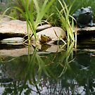 Reflecting On Frogs II by Artlife