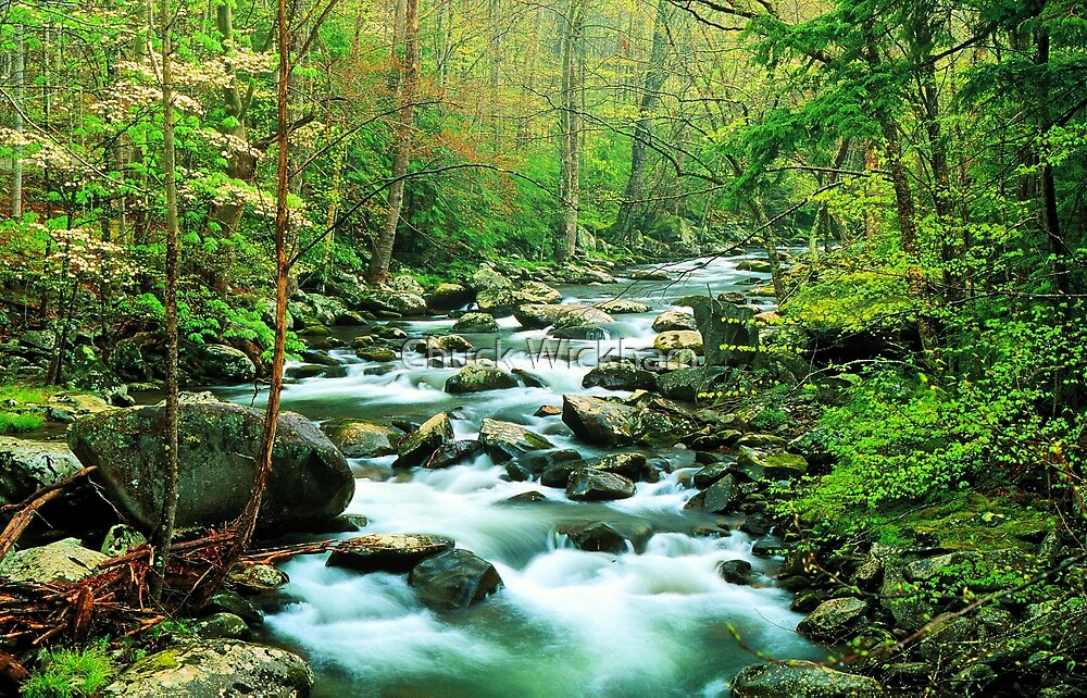 MIDDLE PRONG LITTLE RIVER,SPRING  by Chuck Wickham