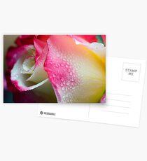 Dewy Beauty Postcards
