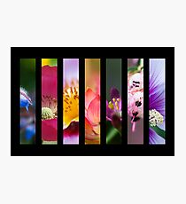 Perennial Bounty Photographic Print