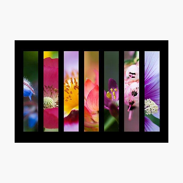 Perennial Bounty Photographic Print