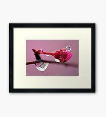 Spring Jewels Framed Print