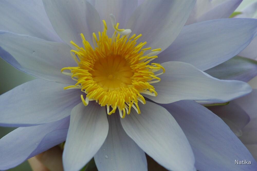 Lily by Natika