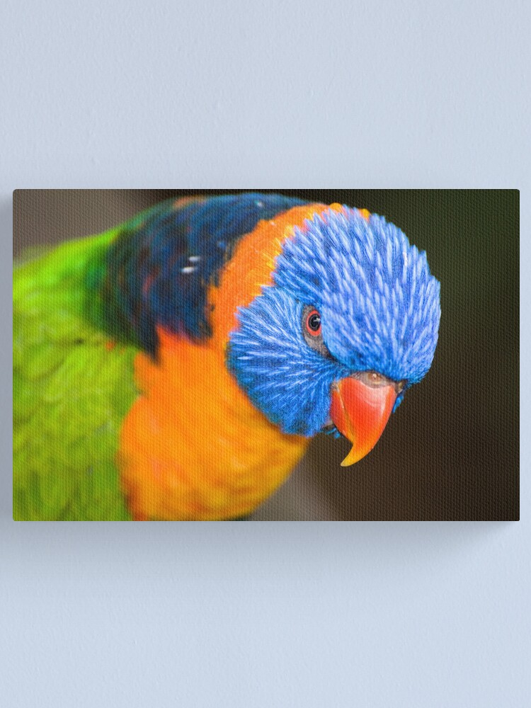 Alternate view of Stare Down Canvas Print