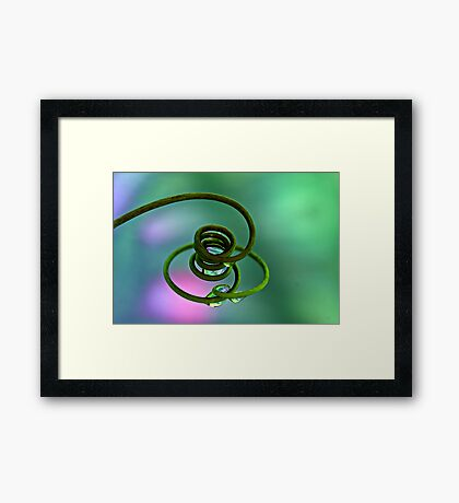 Pig's Tail Framed Print